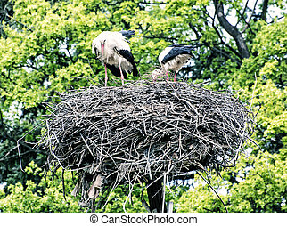 Family of White stork in the nest, bird watching, blue...