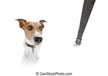 photographies de stock de secteur chouchou promenade chien laisse alerte signe. Black Bedroom Furniture Sets. Home Design Ideas