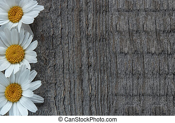 花, 花園, 空間, 木制, text., 地方, 背景, 雛菊, 模仿, 你