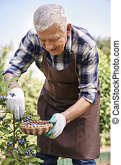 Blueberries are one of my favourite fruits