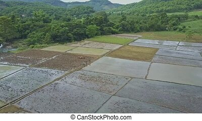 Aerial View Land Plots for Planting Rice among Jungle -...
