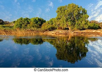 Trees and reflection - Zambezi river