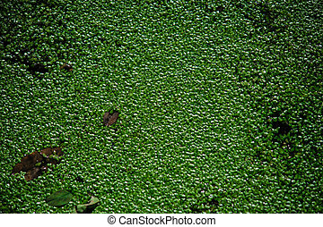 Abstract background of green sheets in swamp. Close up