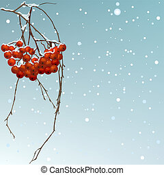 The winter background thread rowan. Illustration in vector...