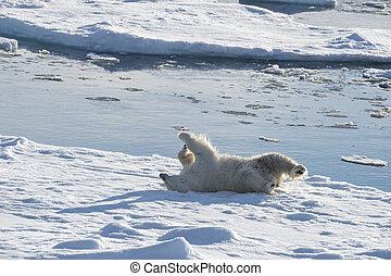 polar, gehen, ice., bär