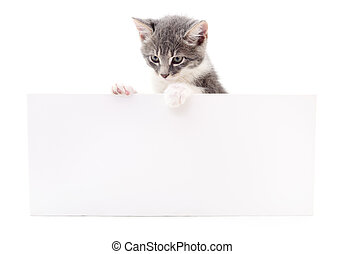Kitten hanging over blank. - Kitten hanging over blank...