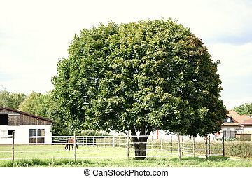 horse farm - A paddock with horses and the stables of a...