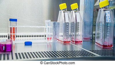 Laboratory work at the steril bank with cell culture flasks...