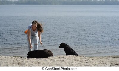 beautiful girl is playing with brown labradors - beautiful...