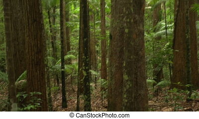 Jungle and forest trees - A medium shot of forest trees...