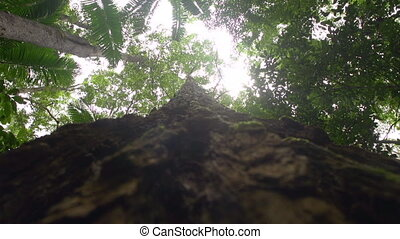Trees branch and sunlight - A worms eye view shot of a tree....