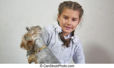 girl and a dog. teen girl holding a yorkshire terrier pet...