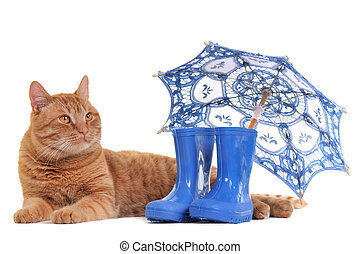 Cat with Boots and Umbrella - Cat with Rubber Boots and...