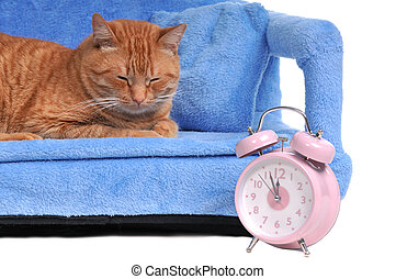 Cat Times - Cat Sleeping with Alarm-Clock