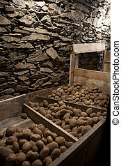 Vegetable cellar - potatoes stored in cold stock