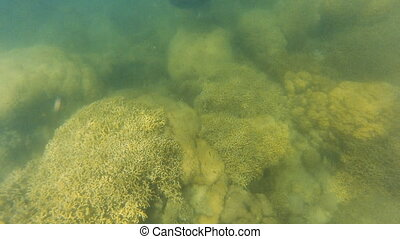Coral reef and stingray underwater - A birds eye view shot...