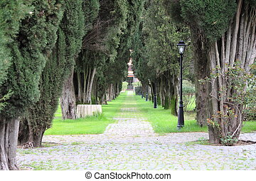 Tree lined road with lamps