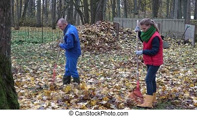 young couple rake maple leaves in backyard. Work in autumn....