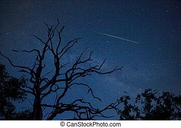Perseid in August - A perseid 'falling star' on a clear sky...