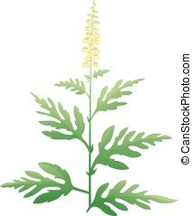 Ragweed Plant - One green ragweed plant with small yellow...