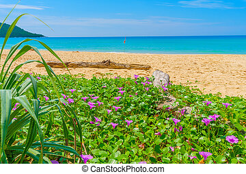 Kata Noi beach with twiner flowers in the foreground travel...