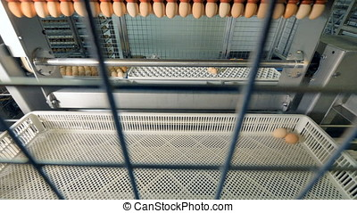 Eggs at a modern automated conveyor belt. 4K. - Eggs moving...