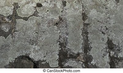 Grey stone covered by lichen. Close-up of stone covered by...