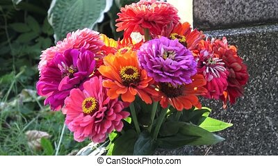 Bright bouquet of multi colored zinnia flowers. A zinnia...