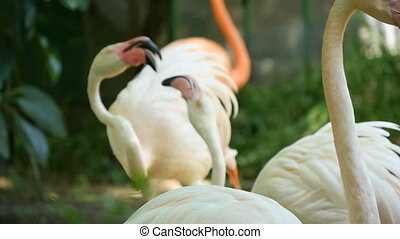 A flock of flamingoes are on the bank of some pond in some...