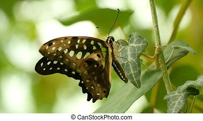 Beautiful and tender butterfly sits on a tropical flower on...