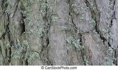 Bark on a tree