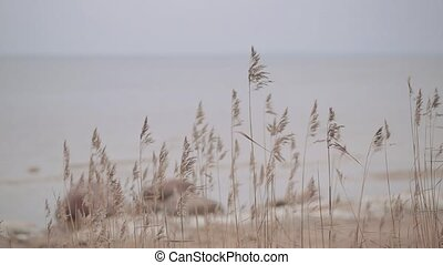 Plants on the seashore in autumn