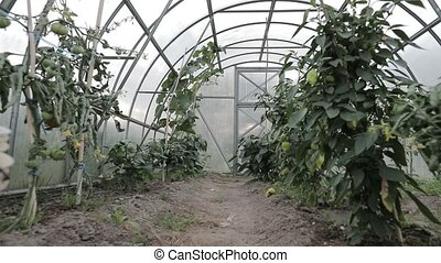 inside the greenhouse. camera is slowly moving forward