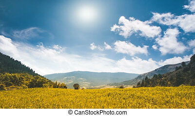 Yellow field in mountain canyon, blue cloudy sky with sun...