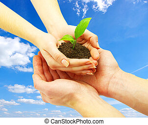 new life - holding a plant between hands
