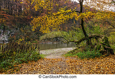 yellow trees on rocky shore of the river - lovely autumnal...