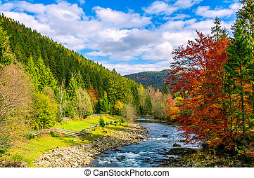 gorgeous day near the forest river in mountains. deciduous...