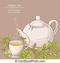 cup of marjoram tea and teapot on color background