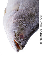 Fresh Snapper fish isolated on a white background.