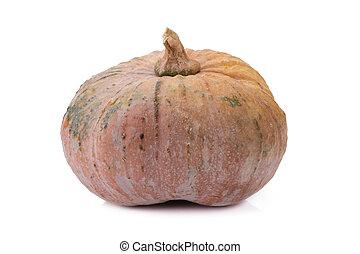 pumpkin on white back ground. - pumpkin on white back ground