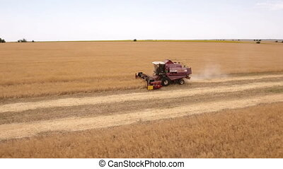Aerial shot of a combine harvester gathering golden wheat in Ukraine in summer