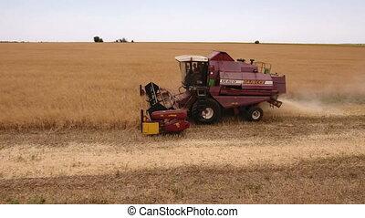 Aerial shot of a combine harvester winnowing ripe wheat in Ukraine in summer
