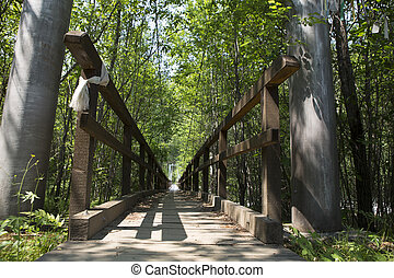 Wooden path in the forest - A forest path from the boards...