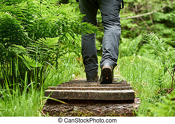 Forest path - Man walking along a wooden path through the...