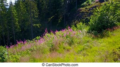 View of a ravine in the forest, summer - View of a green...