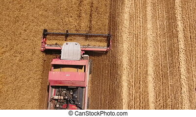 Aerial up down shot of a red combine harvester getting golden wheat in Ukraine