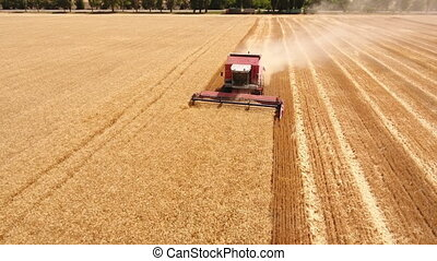 Aerial shot of a combine harvester gathering wheat crop in...