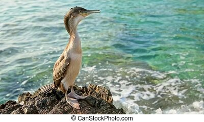 Large bird at the shore - Large fishing bird standing at the...