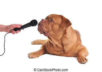 Interview with a gog - Taking interview from a dog