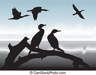 Cormorants on lake shore - illustration silhouettes...